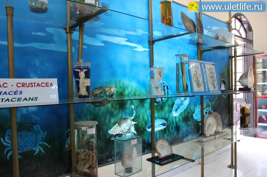 okeanarium-v-nyachange