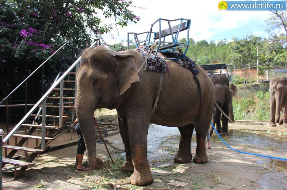 Экскурсия в Далат слоны
