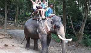 Где можно покататься на слонах на Самуи: координаты, стоимость, отзывы, фото и видео