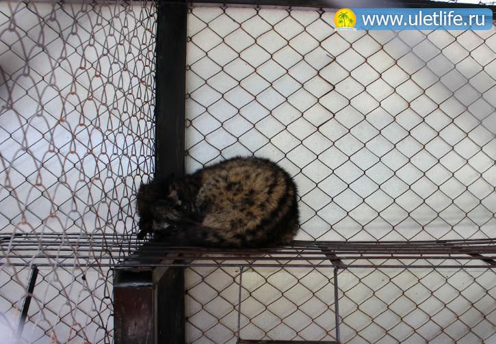 Экскурсия в Далат зоопарк