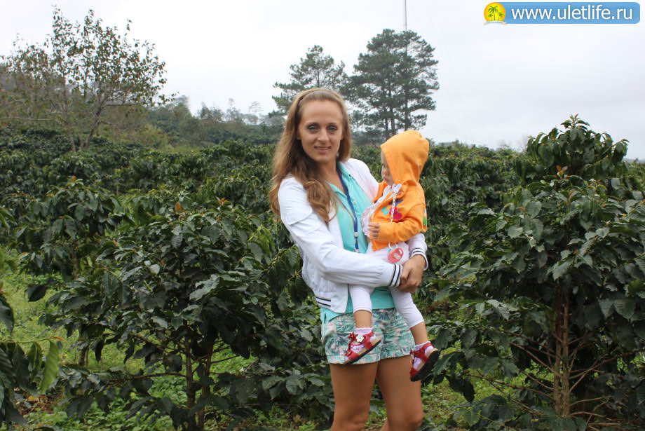 Экскурсия в Далат плантация кофе