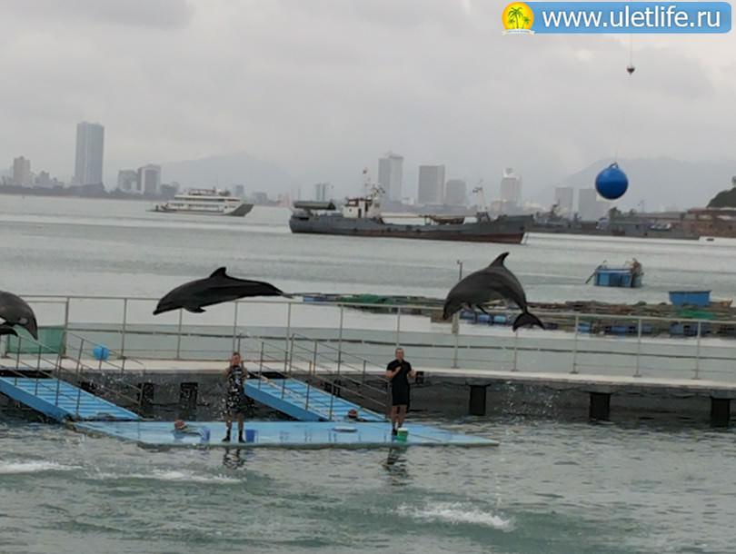 Винперл шоу дельфинов