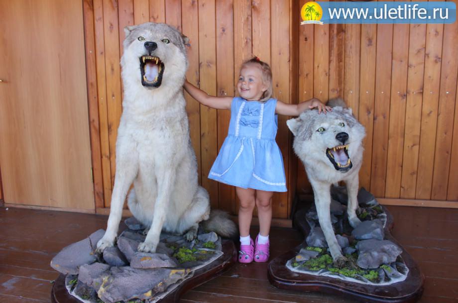tri-medvedya13_mini_mini_mini