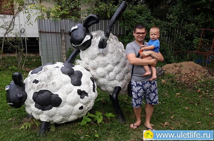 овечья ферма